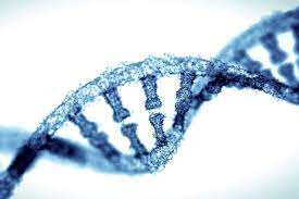 Importance of DNA test in cases of rape & murder.